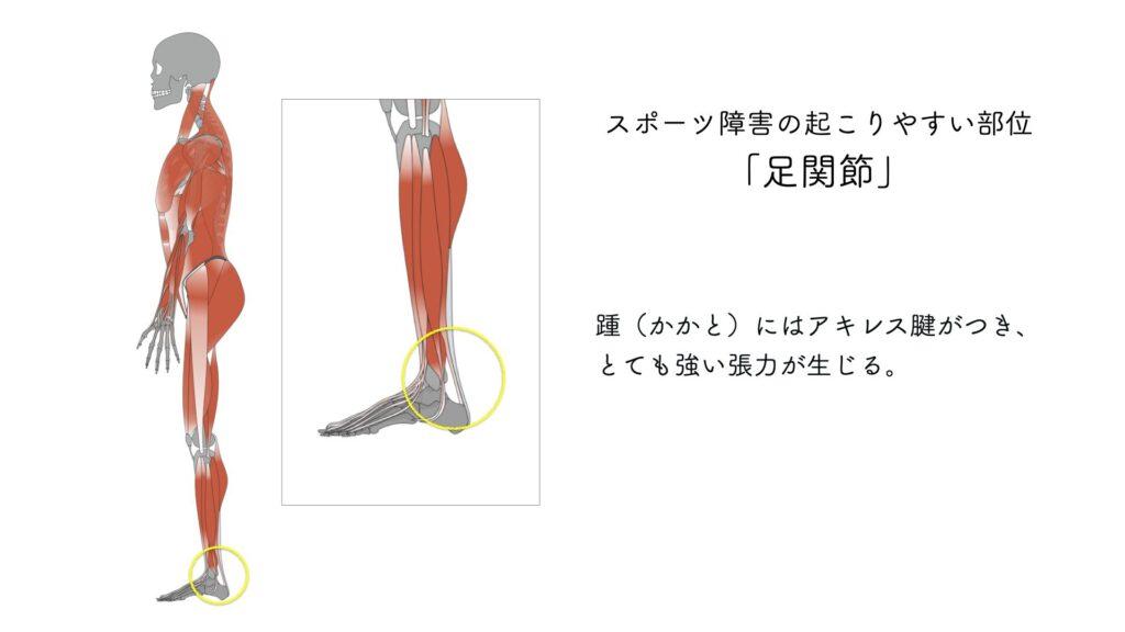 スポーツ障害 足関節